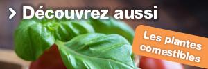 Plantes Comestibles Entretien
