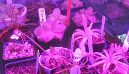 led horticole plante carnivore