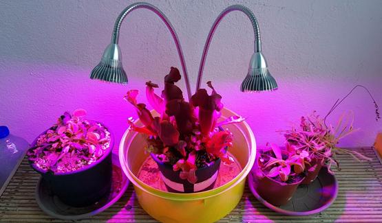 acheter plante carnivore boutique plante carnivore. Black Bedroom Furniture Sets. Home Design Ideas