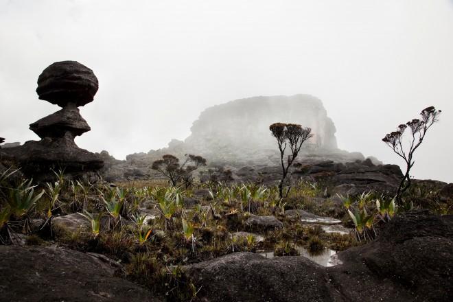 Terre et substrat pour Plante Carnivore
