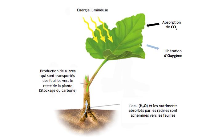 Une Plante Avec Led Soigner Horticole Carnivore Des NP0wkX8nZO